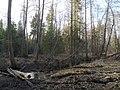 Река Страданка.jpg