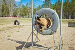 Собаки НГУ 5322 (19354688035).jpg