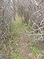 Улюблене місце відпочинку полтавців - panoramio.jpg