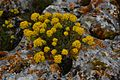 Цветы, пробивающие камни.jpg