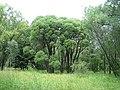 Центральный ботанический сад (23.07.2007) - panoramio.jpg