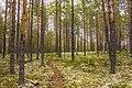 Экологическая тропа. Якша MG 8832.jpg