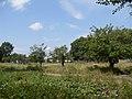 Яблоневый сад - panoramio (11).jpg