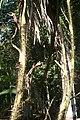 น้ำตกศรีดิษฐ์ Sri Dit waterfall - panoramio - Thaweesak Churasri (32).jpg