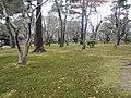 兼六園 - panoramio (28).jpg