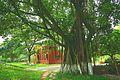华南农业大学,美丽校园r - panoramio.jpg