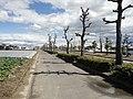 国道155号 - panoramio (10).jpg