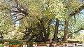 日喀则贡觉林卡8.jpg