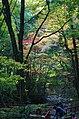 犬鳴山渓谷 2013.11.23 - panoramio.jpg