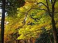 神護寺参道にて 京都市右京区 2013.11.21 - panoramio.jpg