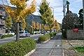 雁坂みち - panoramio.jpg