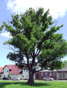 057 protected field elm.png