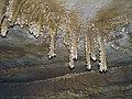 059 Joint-aligned ceiling speleothem, PohlAve 7 (8320903013).jpg