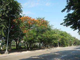 Bonifacio Drive