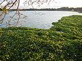 09755jfAngat River Regulatory Dam Bay Lico San Rafael Bustos Angat Bulacan villagesfvf 09.JPG
