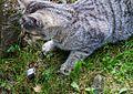 1024 Junge Katze mit Spitzmaus-5045.jpg