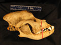 14013008 Right View Jaw.JPG