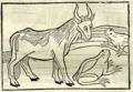 1501 Steinhowel Aesop 1.png