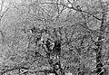 1959 Fortepan 7558.jpg