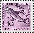 1960 CPA 2469.jpg