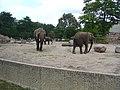 2012-09-15 Tierpark Berlin 01.jpg