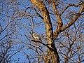 2016.04.11 19.16.47 DSC03284 - Flickr - andrey zharkikh.jpg