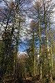 25.3.16 Delamere Forest 15 (26034333015).jpg