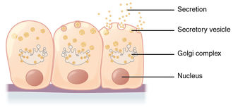 Merocrine - Merocrine secretion