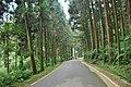 558, Taiwan, 南投縣鹿谷鄉內湖村 - panoramio (13).jpg