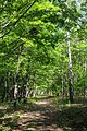 71-212-5014 Zvenygorodka park DSC 4910.jpg