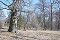 74-101-5021 Chernihiv Oak DSC 7960.jpg