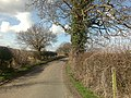 A Cheshire Lane - geograph.org.uk - 1196979.jpg