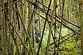 A Park ranger with AK-47 Machine gun in a bamboo forest , Volcanoes National Park Rwanda. Emmanuel Kwizera.jpg