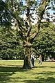A Tree in Hyde Park - geograph.org.uk - 494028.jpg