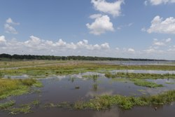 A mashy inlet of Lake Fork in Rains County, east of Dallas in northeast Texas LCCN2015630125.tif
