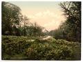 A view near Speech House, Forest of Dean, England-LCCN2002696753.tif