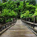 A wooden bridge in chitral.jpg