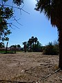 Abandoned Farmstead, Glendale, AZ 2013 - panoramio.jpg