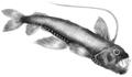Abyssal Fish Sketch.tif