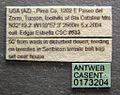 Acanthostichus punctiscapus casent0173204 label 1.jpg