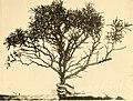 Acta Soc. pro Fauna et Flora Fennica (1912) (16564746447).jpg