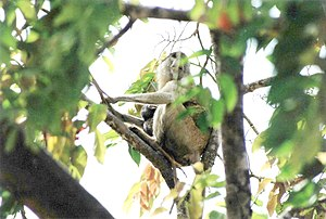 Mole National Park - Monkeys are common in Mole National Park.