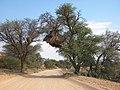 Africa Mabuasehube Kgalagadi.jpg