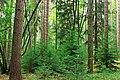 Algerine Swamp Natural Area (6) (14679276206).jpg
