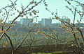 Almond Orchard (1980). (17530590346).jpg