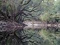 Along the Suwannee - panoramio (6).jpg