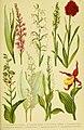 Alpen-Flora für Touristen und Pflanzenfreunde (Pl. 37) (6021510451).jpg