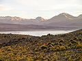 Altiplano, Bolivien (11214119644).jpg