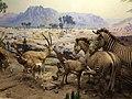 American Museum of Natural History - New York - USA - panoramio (2).jpg