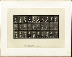 Animal locomotion. Plate 176 (Boston Public Library).jpg